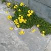 黄色い花の草