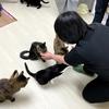 「あちらのお客様からです」を猫日和さんで体験する