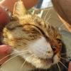 9月前半の #ねこ #cat #猫 その3