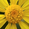 🌻一眼レフ D750+マイクロレンズで花を撮影しました!