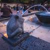 11月の夕暮れ時に上野公園にてスナップ撮影 Canon EOS M6 EF-M 11-22mm
