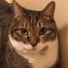 我家の王子様・猫のノア君の好きな穴場的な居場所(●´艸`)ムフフ.。oO