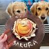 犬話:さくら祝7歳*リンゴ&ササミ簡単ワンコのお誕生日ケーキの作り方