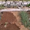 苗と種植え