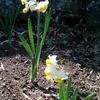 春らしい一日~花壇の球根とこれから