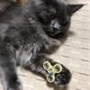 猫もハンドスピナーに興味津々!?
