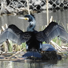 新横浜公園で野鳥探し‼ Nikon「COOLPIX P900」で野鳥撮影《第7回目》