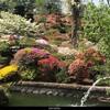 5月5日(水)コロナ禍で危険承知で大桑原ツツジ園へ次いでに須賀川牡丹園、最後は藤沼温泉