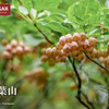 【東北】葉山、月山と対なる寒河江の山、梅雨に濡れた花とブナの森を行く旅