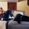 【賃貸管理日記】無断でペット飼っていたらどうなるかしってる?