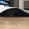 【猫ブログ】サラはどこだ・・・2