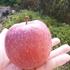 ナシの収穫と奇跡のリンゴの話