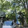 枯れ枝の伐採 除去作業が行われました