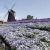 母の日の花博記念公園