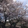 桜と誕生日、と新しい遊び。