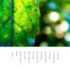 一枚の 木の葉が光る 秋の栞よ