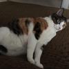 【愛猫日記】毎日アンヌさん#59