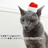 ママたちの地味クリスマス ~なんかゴメンネ編~
