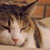オークランドの保護猫カフェ Barista Cats Cafe(バリスタキャッツカフェ)へ|ニュージーランド夫婦旅