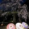 妙蓮寺のライトアップのお話。