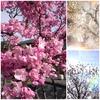 Spring has come!!