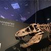 【恐竜博2019】夏休みにオススメ!世界初公開「恐竜博」が凄すぎた🦁