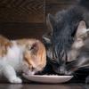 Meal - 猫の食事