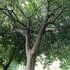 吉祥寺 A-thingsにて写真展「森閑」を開催いたします