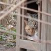 2月5日 荒川土手から下町を通って大手町まで猫さま歩き とその情景