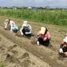 自然農法 ひだまり市場