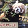 【レポ#14】秋の動物園は最高です!千葉市動物公園現地レポート(2020/10/31)【動物園】