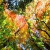 山梨県河口湖周辺(もみじ回廊と大池公園)の紅葉と撮影テクニック