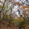 大分県由布岳に登る予定が悪天候のため麓での紅葉狩りになった話
