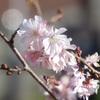 伊香保の紅葉&花達