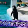 『月曜から夜更かし』にも登場!全く言う事を聞かないペンギンショーが逆に面白いと話題www
