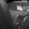 縮小運転猫モード、でしたっけ?