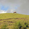 《11.3.11》被災地東北、18次<巡訪>/ ㊳10日目(3)北上高地〝らしい〟山地放牧場へ  今回のテーマ[つぎのステップにむけて]