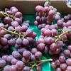 さて、採れ過ぎた葡萄をどうするか。