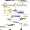高血圧の薬(カルシウム拮抗薬)の作用機序と使い分け