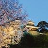 改修工事中でも!熊本城の「夜桜」「御幸坂の桜並木」は多くの人を魅了する🌸