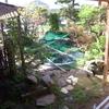 「庭いじりの贅沢」「鯉が鷺に食べられた。」(9)鷺対策に竹を切ってきて、プラスチックの紐を張った。(鉄パイプバージョン)