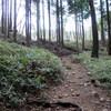 長峰山から掬星台、炭ヶ谷へのハイキング(その4)掬星台~桜谷~マムシ谷~炭ヶ谷~谷上