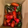 真っ赤な夏野菜たち、で夜ご飯。