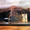 T・レックスの化石、33.6億円で落札☆ 気温☆ 恐竜は、本当に爬虫類?☆