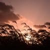 冠水と夕焼け:淀川河川公園枚方地区