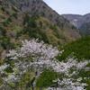 安倍川を遡行して、浅い春を楽しみました