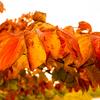 秋を感じてきました🍁