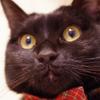 今日の黒猫モモ&白黒猫ナナの動画ー621
