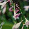 7月9日誕生日の花と花言葉