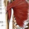 大胸筋の伸張テストと圧痛好発部位